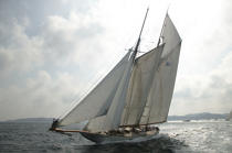 Eleonora aux Voiles de St Tropez.. © Philip Plisson / Pêcheur d'Images / AA08747 - Photo Galleries - Gaff schooner