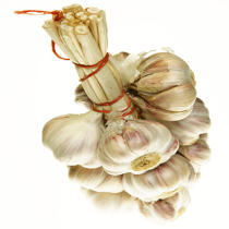 Garlic. © Guillaume Plisson / Pêcheur d'Images / AA10819 - Photo Galleries - Gourmet food