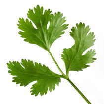 Parsley bit. © Guillaume Plisson / Pêcheur d'Images / AA10836 - Photo Galleries - Gourmet food