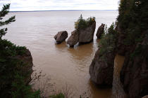Bay of Fundy. © Philip Plisson / Pêcheur d'Images / AA11616 - Photo Galleries - Flora