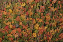 Autumn in Maine. © Philip Plisson / Pêcheur d'Images / AA13153 - Photo Galleries - Autumn Colors in New England