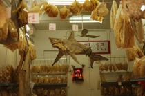 Dried fish in Hong Kong. © Philip Plisson / Pêcheur d'Images / AA14015 - Photo Galleries - Hong Kong, a city of contrasts