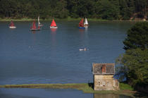 Traditional sailing on Auray river. © Philip Plisson / Pêcheur d'Images / AA15691 - Photo Galleries - Morbihan