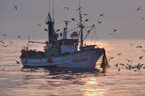 Sardine fishing in Galicia © Philip Plisson / Pêcheur d'Images / AA17051 - Photo Galleries - Sardine Fishing