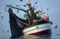 Sardine fishing in Galicia © Philip Plisson / Pêcheur d'Images / AA17052 - Photo Galleries - Fishermen of the world