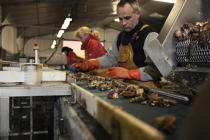 The oysters are sorted and graded. © Philip Plisson / Pêcheur d'Images / AA18466 - Photo Galleries - Oyster Farming
