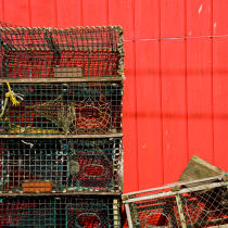 Lobsters, Port Clyde © Philip Plisson / Pêcheur d'Images / AA19407 - Photo Galleries - Autumn Colors in New England
