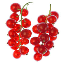 Duo redcurrants. © Philip Plisson / Pêcheur d'Images / AA19802 - Photo Galleries - Gourmet food