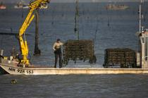 Oyster framing in front of Oleron island. © Philip Plisson / Pêcheur d'Images / AA22510 - Photo Galleries - Oyster Farming