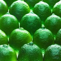 Limes. © Philip Plisson / Pêcheur d'Images / AA24839 - Photo Galleries - Gourmet food