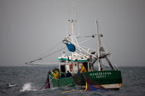 Sardine fishing boat . © Philip Plisson / Pêcheur d'Images / AA26401 - Photo Galleries - Sardine Fishing