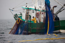 Sardine fishing boat . © Philip Plisson / Pêcheur d'Images / AA26404 - Photo Galleries - Sardine Fishing
