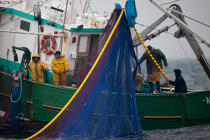 Sardine fishing boat . © Philip Plisson / Pêcheur d'Images / AA26408 - Photo Galleries - Sardine Fishing