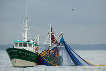 Sardine fishing boat . © Philip Plisson / Pêcheur d'Images / AA26422 - Photo Galleries - Sardine Fishing