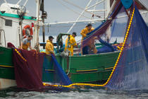 Sardine fishing boat . © Philip Plisson / Pêcheur d'Images / AA26423 - Photo Galleries - Sardine Fishing