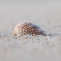 Shell © Philip Plisson / Pêcheur d'Images / AA27362 - Photo Galleries - Sea decoration