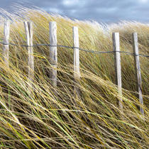 Edge of dune © Philip Plisson / Pêcheur d'Images / AA29694 - Photo Galleries - Sea decoration