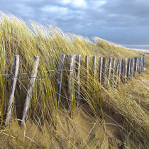 Edge of dune © Philip Plisson / Pêcheur d'Images / AA29695 - Photo Galleries - Sea decoration
