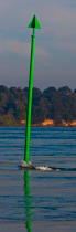 Morning in the Gulf of Morbihan © Philip Plisson / Pêcheur d'Images / AA30932 - Photo Galleries - Vertical panoramic
