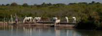 Landscape of the Camargue © Philip Plisson / Pêcheur d'Images / AA31008 - Photo Galleries - From Sète to Martigues