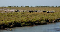 Landscape of the Camargue © Philip Plisson / Pêcheur d'Images / AA31009 - Photo Galleries - From Sète to Martigues