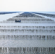 Mussels park in the Bay of Mont-Saint-Michel © Philip Plisson / Pêcheur d'Images / AA35479 - Photo Galleries - Aquaculture