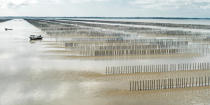 Mussel culture in the bay of Mont Saint-Michel © Philip Plisson / Pêcheur d'Images / AA38225 - Photo Galleries - Aquaculture