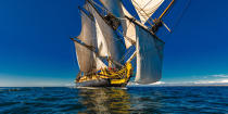 © Philip Plisson / Pêcheur d'Images / AA38663 L'Hermione at sea - Photo Galleries - Monohull
