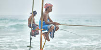 © Philip Plisson / Pêcheur d'Images / AA39464 Fishermen on a stick in Sri Lanka - Photo Galleries - People