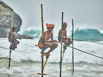 © Philip Plisson / Pêcheur d'Images / AA39466 Fishermen on a stick in Sri Lanka - Photo Galleries - People