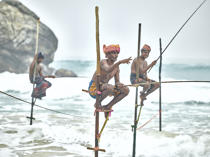 © Philip Plisson / Pêcheur d'Images / AA39465 Fishermen on a stick in Sri Lanka - Photo Galleries - People