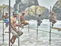 © Philip Plisson / Pêcheur d'Images / AA39472 Fishermen on a stick in Sri Lanka - Photo Galleries - People