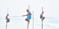 © Philip Plisson / Pêcheur d'Images / AA39470 Fishermen on a stick in Sri Lanka - Photo Galleries - People