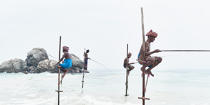 © Philip Plisson / Pêcheur d'Images / AA39483 Fishermen on a stick in Sri Lanka - Photo Galleries - People