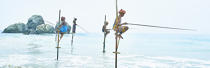 © Philip Plisson / Pêcheur d'Images / AA39482 Fishermen on a stick in Sri Lanka - Photo Galleries - People