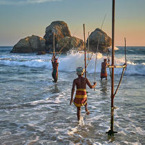 © Philip Plisson / Pêcheur d'Images / AA39493 Fishermen on a stick in Sri Lanka - Photo Galleries - People