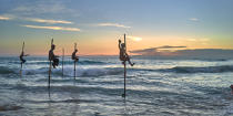 © Philip Plisson / Pêcheur d'Images / AA39502 Fishermen on a stick in Sri Lanka - Photo Galleries - People