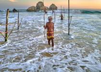 © Philip Plisson / Pêcheur d'Images / AA39507 Fishermen on a stick in Sri Lanka - Photo Galleries - People