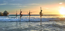 © Philip Plisson / Pêcheur d'Images / AA39496 Fishermen on a stick in Sri Lanka - Photo Galleries - People