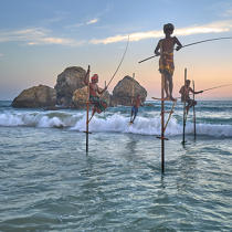 © Philip Plisson / Pêcheur d'Images / AA39501 Fishermen on a stick in Sri Lanka - Photo Galleries - People
