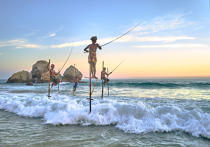 © Philip Plisson / Pêcheur d'Images / AA39504 Fishermen on a stick in Sri Lanka - Photo Galleries - People
