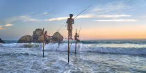 © Philip Plisson / Pêcheur d'Images / AA39505 Fishermen on a stick in Sri Lanka - Photo Galleries - People