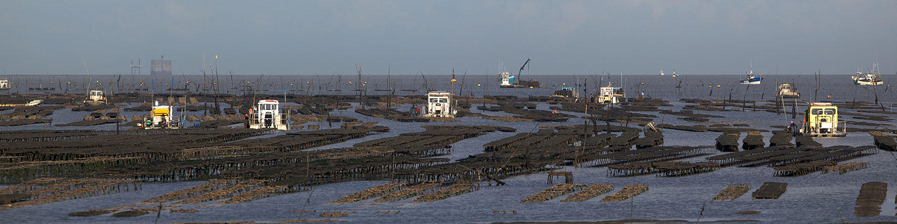 Oyster Farming - Photo Plisson