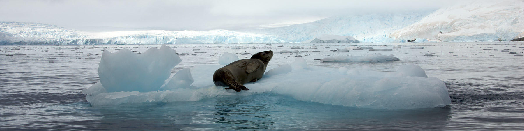 Antarctique - Photo Plisson